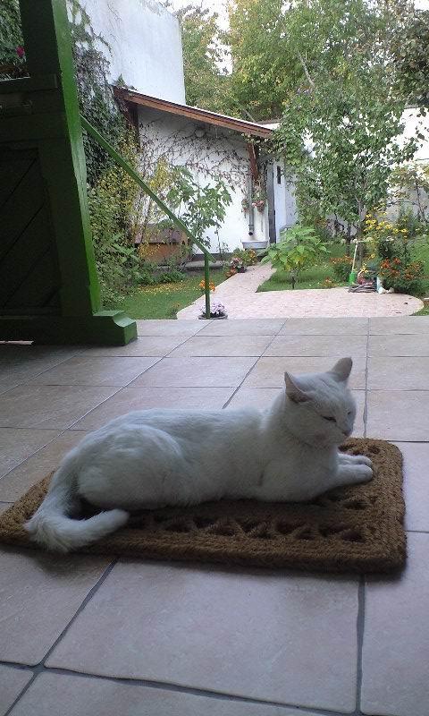 A macska gyakran időzik a földsugárzás ingersávjában