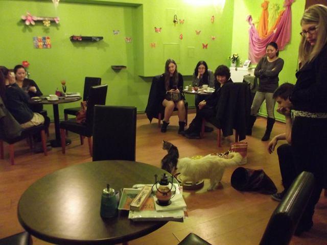 Budapesti Cat Café