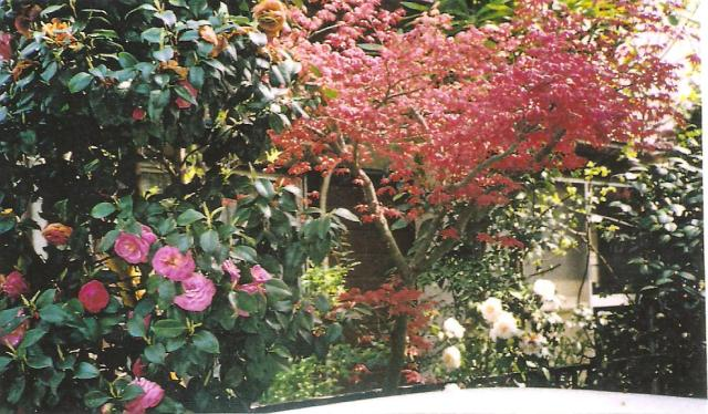 A japánok gyakran virágzó bokrokat telepítenek kertjükbe